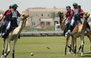zdjęcie gry w polo na wielbłądach