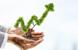 drzewko bonsai przedstawiające wykres rosnący
